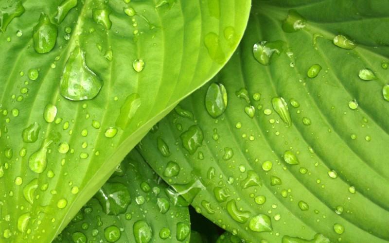 green biomas